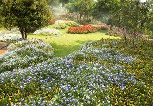 étapes travaux pour l'aménagement de jardin